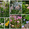 2013 5月の庭の花