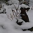 2012 2/20 雪