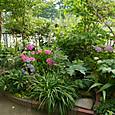 2013 6月の庭