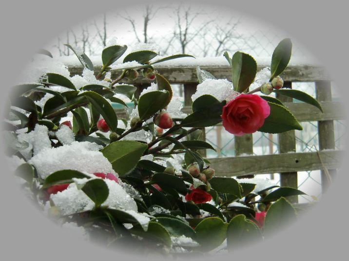 2010 12/31 雪の大晦日