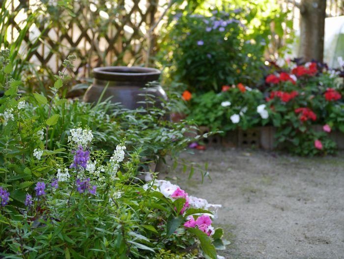 2011 10月の庭
