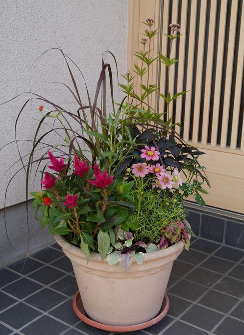 2012 10月 秋の寄せ植え
