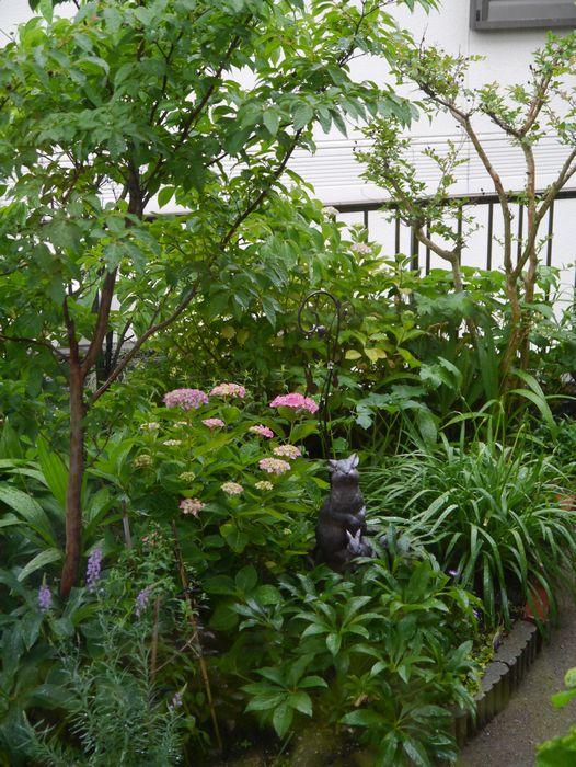 2013 5月 雨の日の庭