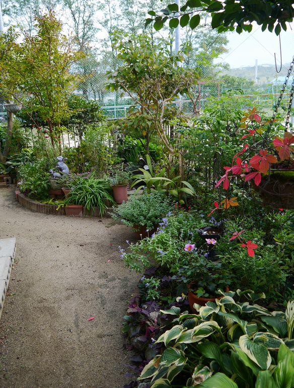 2013 10月の庭
